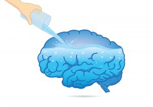 Hydrate your brain